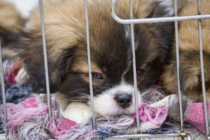 Atlanta City Council Forbid Pet Stores from Selling Puppies and Kittens
